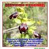biodiversidad-14