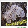 biodiversidad-15