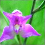 biodiversidad-3