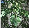biodiversidad-9